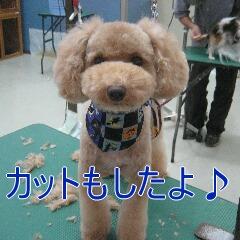 4_20101019170140.jpg