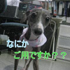 4_20101031113954.jpg
