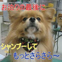 4_20101104151510.jpg