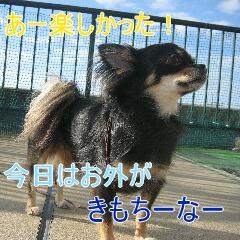 4_20101104152118.jpg