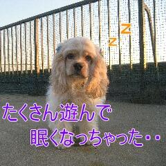 4_20101106193747.jpg