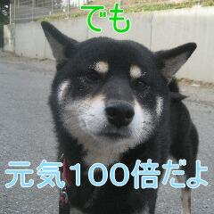 4_20101113161348.jpg