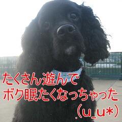 4_20101119161042.jpg