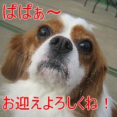 4_20101119161543.jpg