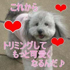 4_20101119162144.jpg
