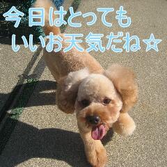 4_20101125163351.jpg