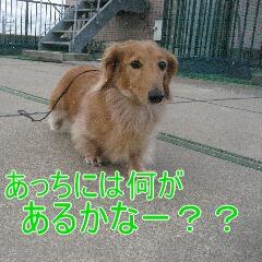 4_20101213163946.jpg