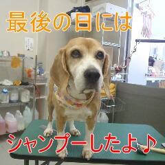 4_20110107150739.jpg