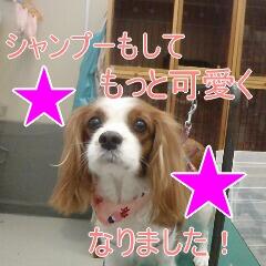 4_20110110171140.jpg