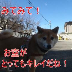 4_20110110172403.jpg