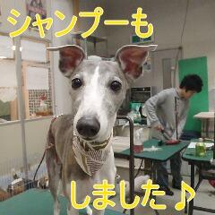 4_20110110172748.jpg