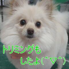 4_20110110172937.jpg