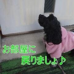 4_20110113190053.jpg