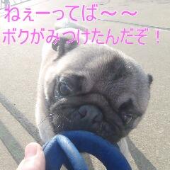 4_20110113192643.jpg
