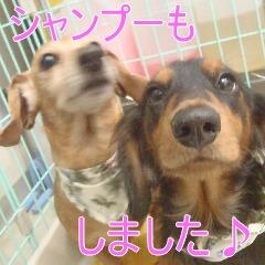 4_20110114161140.jpg