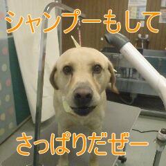4_20110115173743.jpg
