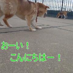 4_20110115174311.jpg