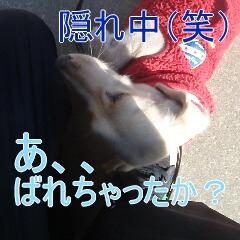 4_20110121162810.jpg