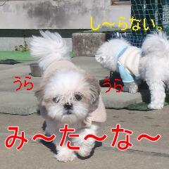 4_20110121163424.jpg