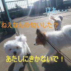 4_20110121163652.jpg