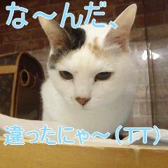 4_20110121164247.jpg