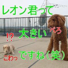 4_20110126154731.jpg
