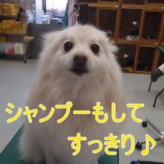 4_20110131170931.jpg