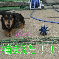 IMG_1145.jpg