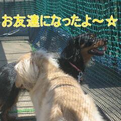 IMG_2963_20100720161550.jpg