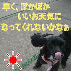 IMG_2975.jpg