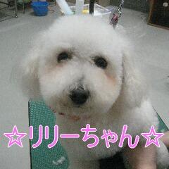 IMG_2988_20100309140941.jpg