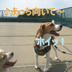 IMG_3628_20100922185346.jpg