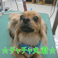 IMG_3831_20100918195119.jpg