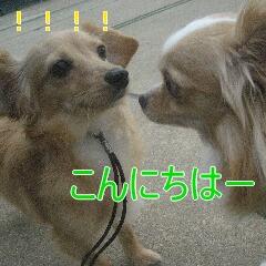 IMG_3910_20100820122726.jpg