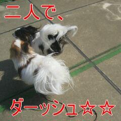 IMG_4022_20100407170614.jpg