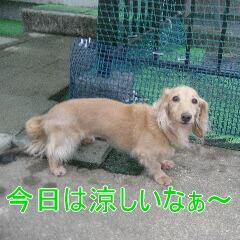 IMG_4146_20101003160309.jpg