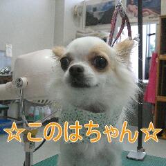 IMG_5211.jpg