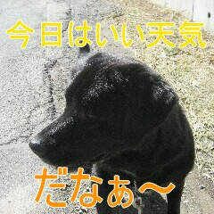 IMG_5842_20101025170108.jpg