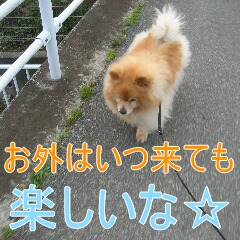 IMG_6049_20100713183024.jpg