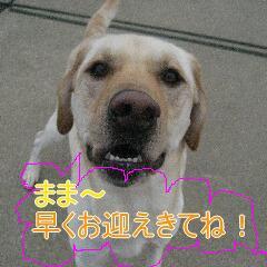 IMG_6970_20101031113746.jpg
