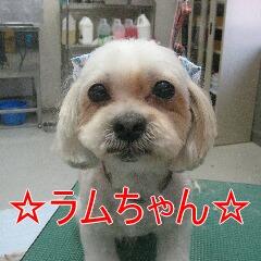 IMG_7409.jpg