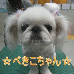 IMG_7604.jpg
