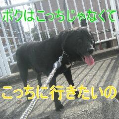IMG_8289.jpg