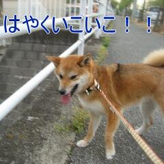 IMG_8409.jpg