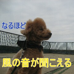IMG_9299_20101129160000.jpg