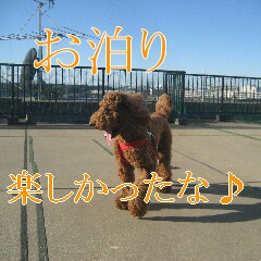 IMG_9824_20101209182921.jpg