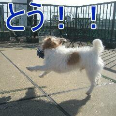 IMG_9874_20101212161336.jpg