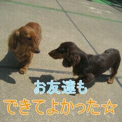 IMG_9899_20100713183242.jpg