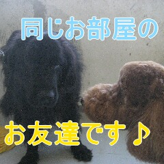 IMG_9904_20101209183124.jpg