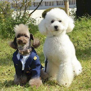 京都府警の嘱託警察犬になったモッチ(左)とマイ